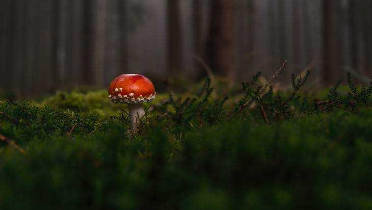 В брянском лесу начали розыск пропавшей женщины