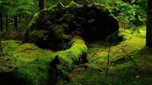 Потерявшуюся в брянском лесу женщину до сих пор не нашли