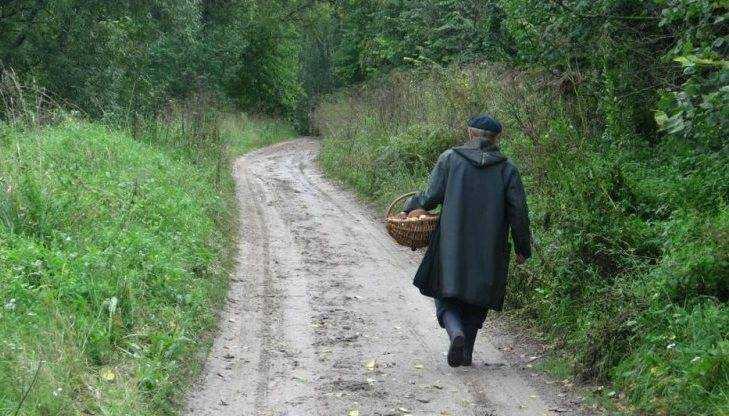 Потерявшаяся в брянском лесу женщина нашлась