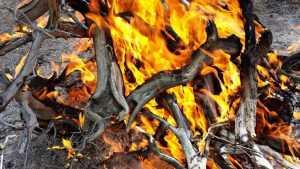 В Трубчевском районе брянцам запретили разводить костры