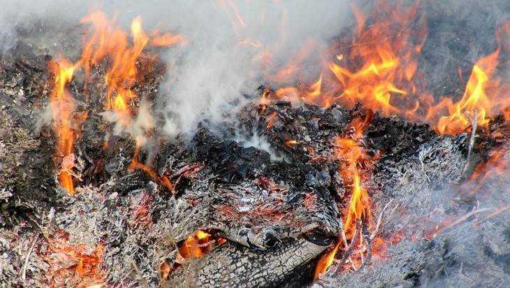 Брянские ветеринары предали огню курский фарш