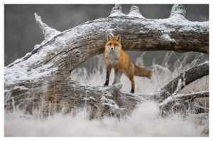 Брянские фотографы примут участие в экологическом конкурсе