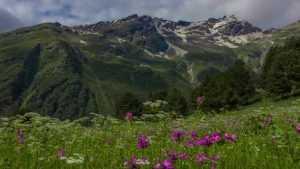 Дагестан напоил брянцев горным чаем