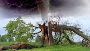 Брянщину снова ждёт испытание грозой и шквальным ветром