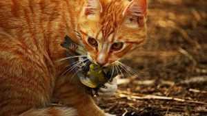 В брянском селе бешеный кот напал на подростка