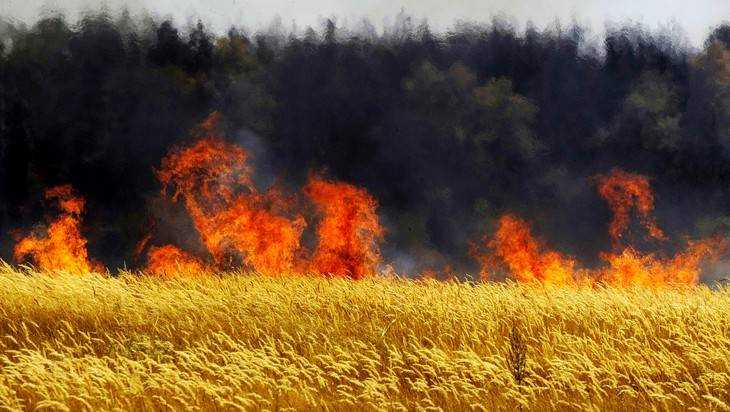 Под Брянском сгорела пшеница