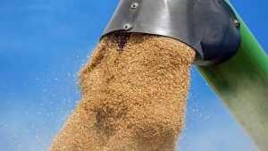 В Брянской области намолотили 600 тысяч тонн зерна