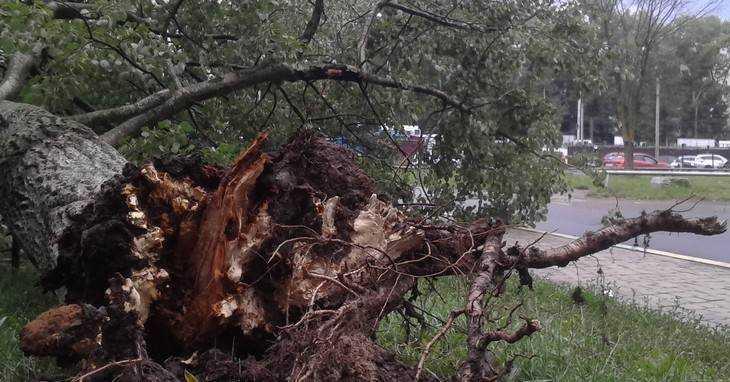 На брянцев обрушился ураган – 585 домов остались без света