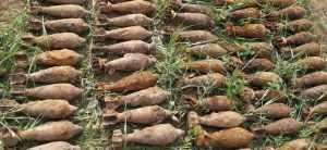 У брянской деревни обнаружили склад мин