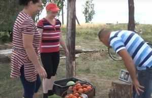 Торговля отвернулась от качественных брянских помидоров