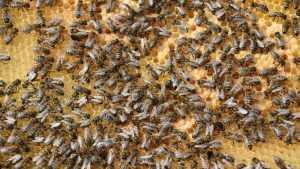 Брянский мед прошел жесткую проверку