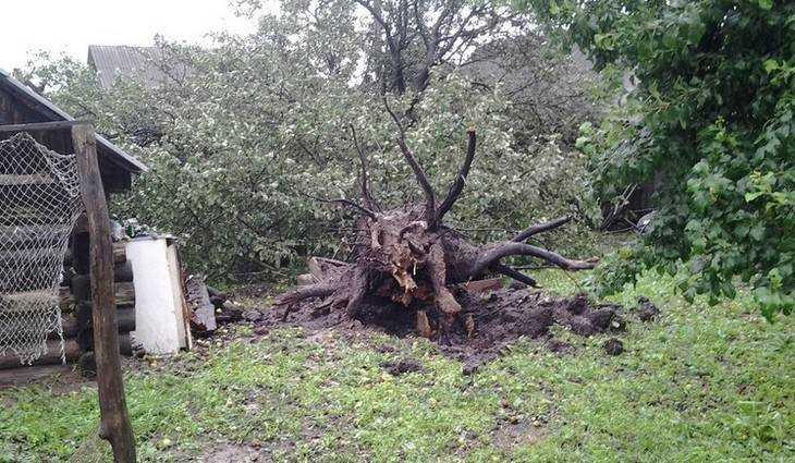 После урагана без электричества остались 18 тысяч брянцев