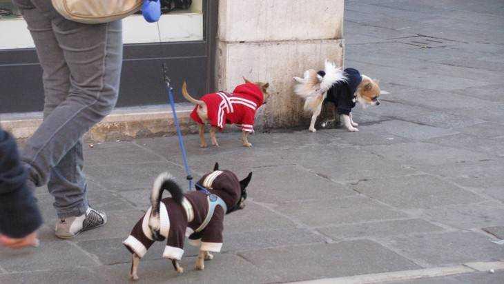 В Брянске определили места для выгула собак
