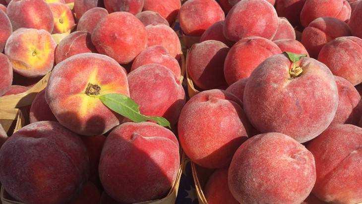 Брянские эксперты нашли вредителя в персиках