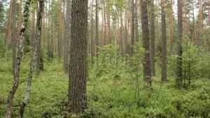 Брянск защитят «зеленым поясом»