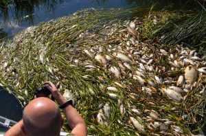 Брянская прокуратура назвала виновных в отравлении реки Сев