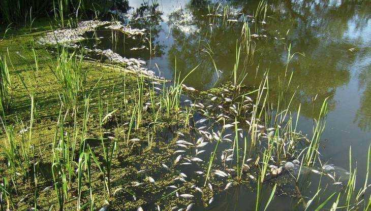 Брянские спасатели и экологи очистили отравленную реку Сев