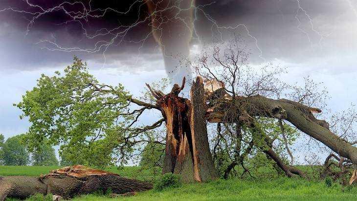 Брянские энергетики оперативно устранили последствия урагана