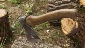 Возбуждено дело о вырубке 53 сосен в Брянском районе
