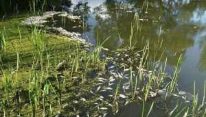 Жители брянского Севска остались без воды после гибели рыбы в реке