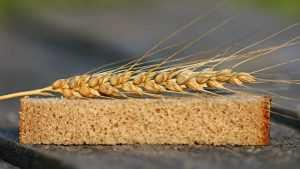Брянское хозяйство наказали за зерно с загадкой