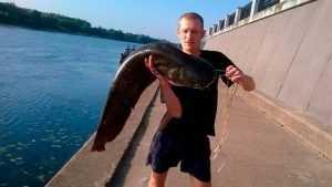 В Соже рыбак поймал сома длиной 126 сантиметров