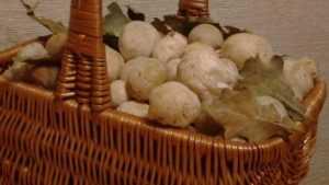 Брянский учитель нашел самый смрадный и самый полезный гриб
