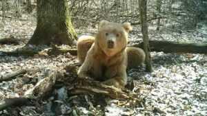 Медведи стали пугающе часто встречаться брянцам
