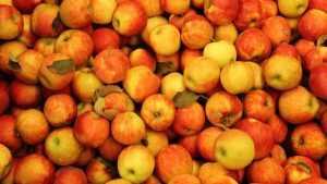 В Брянской области уничтожили 19 тонн польских яблок