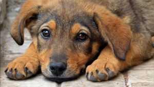 Брянским чиновникам приказали ловить бродячих псов