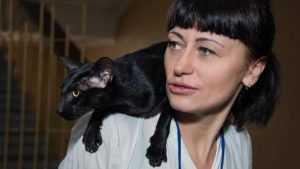 На выставку в Брянске привезли сотню кошек