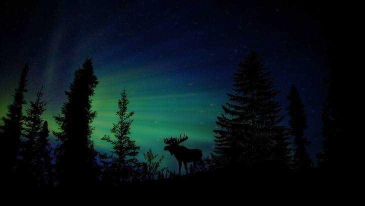 Брянское правительство уйдет в лес