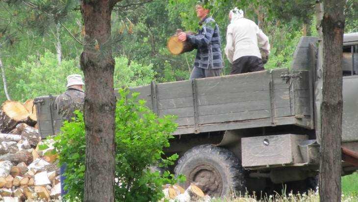 По брянскому лесу погулял загадочный бурелом