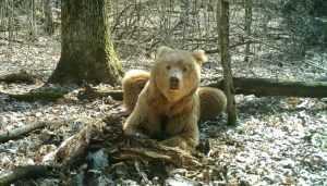 Сенаторов Совфеда познакомили с брянским медведем Арсением