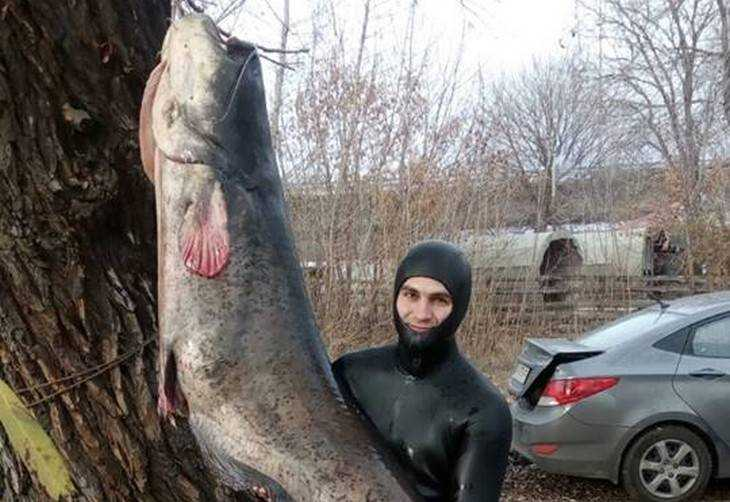 Завистники стали угрожать рыбаку, добывшему сома длиной 2,5 метра