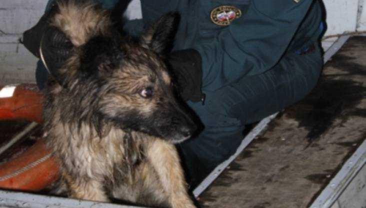 Брянские сотрудники МЧС спасли собаку от гибели на реке