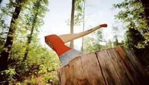 Брянца будут судить за незаконное уничтожение леса