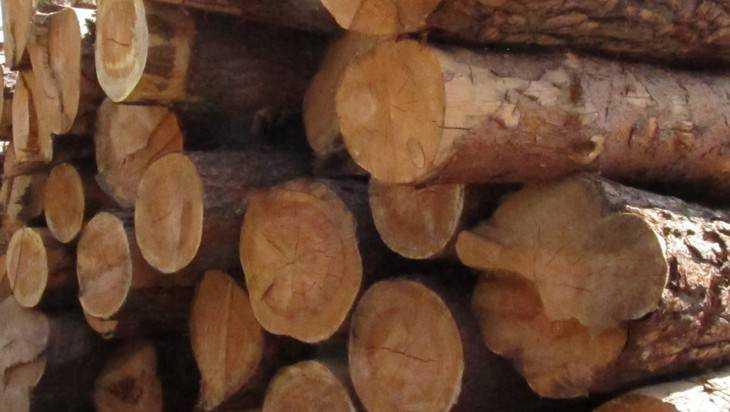 Лесную брянскую глушь отдадут даром