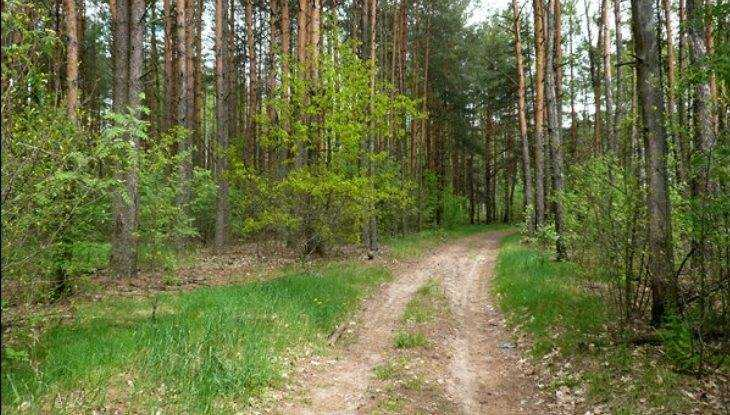 В Брянске создадут городское лесничество
