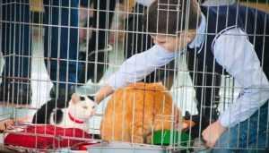 Брянских котиков осчастливили благотворительным праздником
