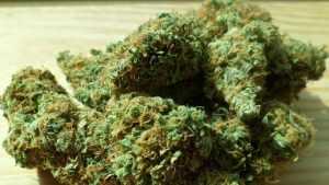 Брянец попался в Калуге с марихуаной