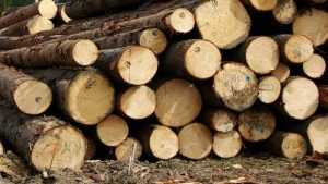 Брянцев настигла дурная слава уничтожителей леса