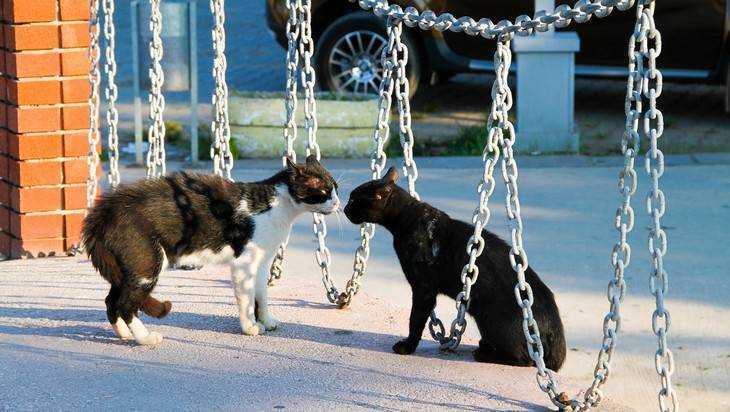 В брянском городе бешеный кот напал на хозяев
