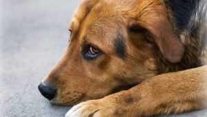 Власти Брянска предложили горожанам окрыть приют для собак