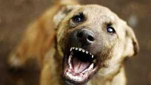 Центр брянского города захватила стая агрессивных псов