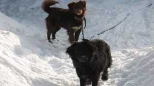 Брянские зоозащитники сообщили о травле собак