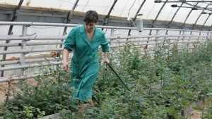 Прокуратура проверит жалобы о захвате брянской агрофирмы «Культура»
