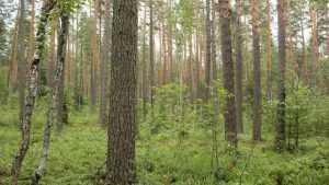 Двоих брянцев отправили в колонию за вырубку леса на 650 тысяч