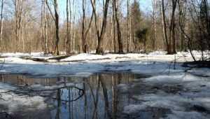 Весна придёт на Брянщину со снегом и десятиградусным теплом
