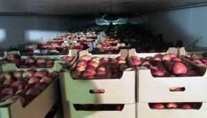 Брянские таможенники раздавили 20 тонн польских яблок
